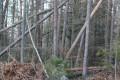 Der Wald nach Sturm Sabine