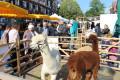 Archivbild Herbstmarkt Calw
