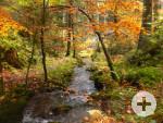 Genießerpfad Calw - Herbst im Rötelbachtal / Quelle: Stadt Calw