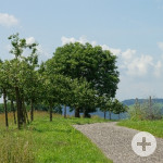 Hugenotten- und Waldenserpfad_Calw-Althengstett_Weg mit Aussicht / Quelle: Stadt Calw