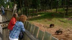 Wildschweingehege Aussichtssteg / Quelle: Bernhard Stopper